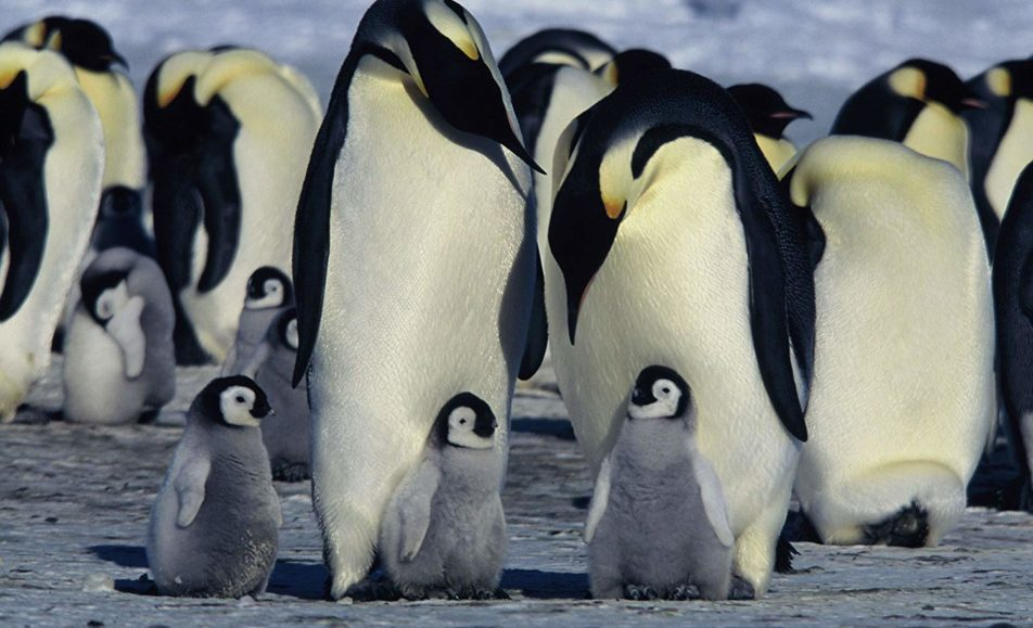GET TICKETS:  March of the Penguins (Family Film Series)